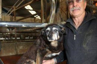Muere Maggie, la perra más vieja del mundo
