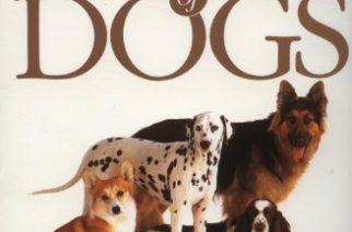 Las 10 razas de perros más inteligentes – ¿está tu mascota en la lista?
