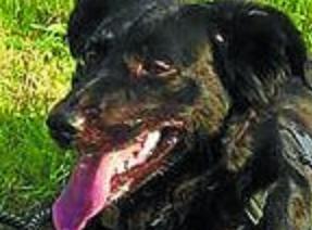 Rafael Estévez murió después de intentar salvar a su perra 'Naia' en Andoain