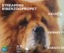 El sector de las mascotas factura en España más de 1.000 millones