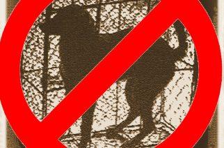 Taiwán prohibió el consumo de carne de perro y de gato