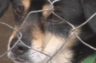 El abandono de mascotas sube un 40% en Semana Santa, según Tiendanimal