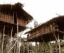 KOROWAI: La tribu papú de los árboles