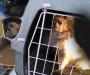 Contrabandean cachorros de perros a Suecia – ganan mucha 'pasta'