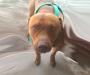 Pitbull perforó el cráneo con los colmillos a niña de 18 meses