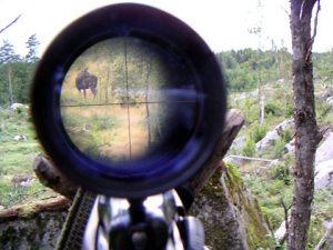 Hay 300 000 cazadores en Suecia y unos 250 000 de ellos suelen participar en la caza del alce
