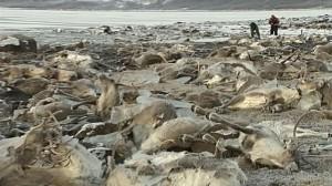 Imágen de los renos ahogados