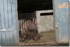 450x301-images-stories-grisfarmer-Inledningsbild