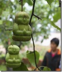 buddah-pears-2
