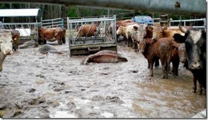 djurvanvård
