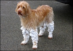 dog-wearing-snow-socks