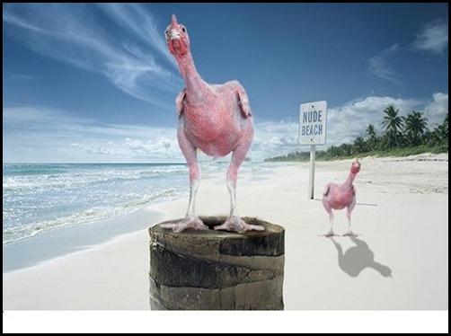 Nude-Beach--40678