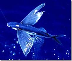 pez_volador