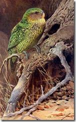 kakapobtwk