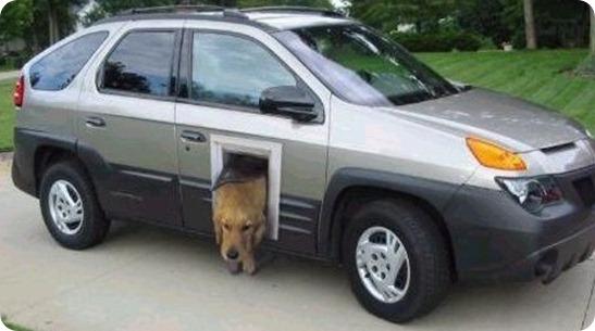 coche para perros