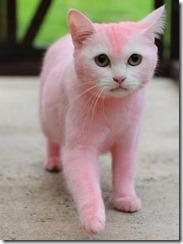 gato pink_