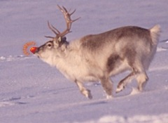 Rudolph_the_Red-Nosed_Reindeer