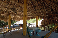papaya lodge-