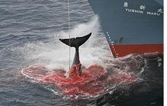japón-ballenas