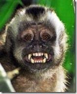 m capuchino