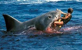 tiburón4