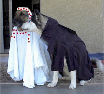 muslimska hundar