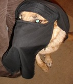 niqab_halal_dog