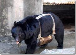 bile_bear