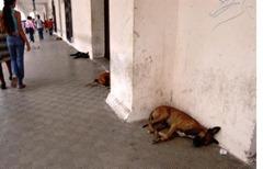 perros callejeros cartagena colombia