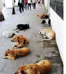perros sucre