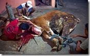 matadero indonesio