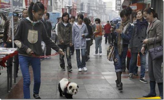 panda_dog_1-