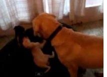 perritos-mendoza