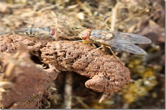 pilobolus-flies-rhino-lr1