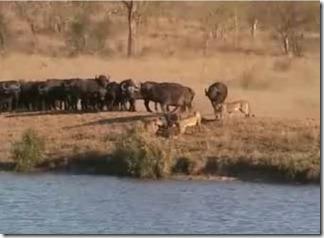 batalla en Kruger