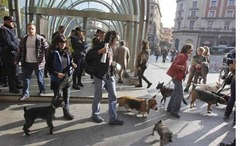 protesta animalista bilbao