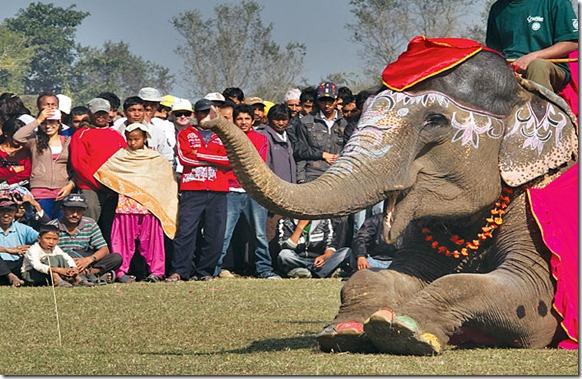 ELEPHANT-BEAUTY-PAGEANT-WIN_2