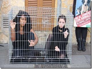 activistas animales enjaulados