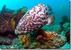cabo-pulmo-national-marine-park