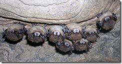 bats wns new york cave