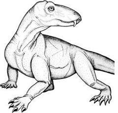 dinocephalian Pampaphoneus biccai