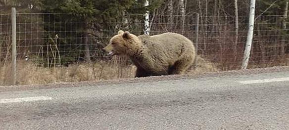 björn hofors