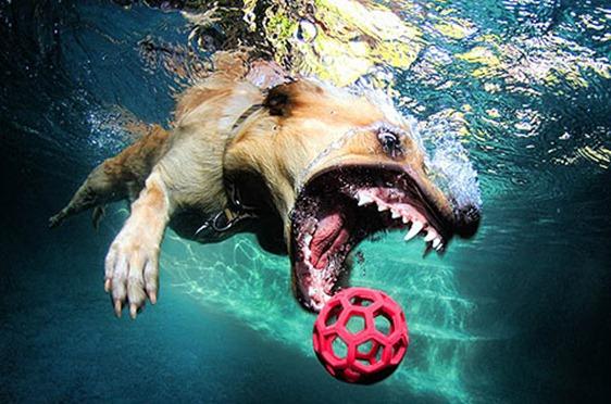 underwater_dog3