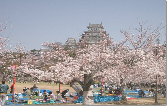 Castle_Himeji_sakura