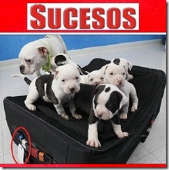 bulldogs toledo4