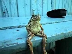 frog-sitting-on-a-bench-like-a-human