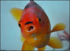 guldfisk2hitler