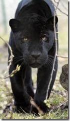 jaguarer parken zoo