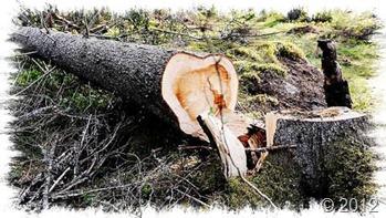 atrapado bajo las raíces de un árbol-