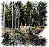 atrapado bajo las raíces de un árbol